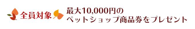 全員対象 最大10,000円のペットショップ商品券をプレゼント